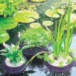 Laguna Floating Pond Planters Small – 25cm Diameter