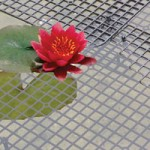 Netfloat Pond Protectors – 10 Square Pads