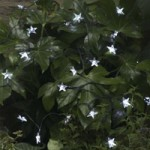 Smart Solar Star Lights – 100 LED