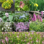 Wildlife Marginal Plants Pack of 6 (9cm Pots)