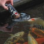 Velda Fish Food Feeding Bottle