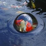 Velda Floating Koi Dome Small (35cm)